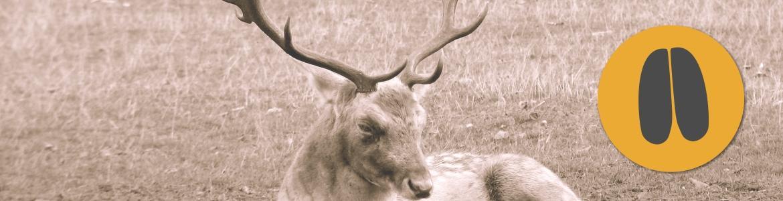 Fox Bullets_category_fallow deer 2
