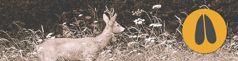 Fox-Bullets_category_roe-deer-2