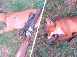 roe-deer-and-fox