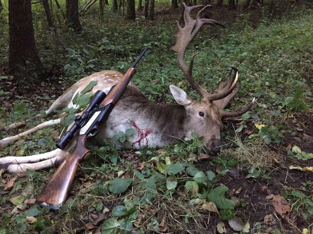fallow deer archives fox bullets