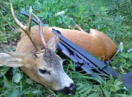 Fox bullets roe deer buck