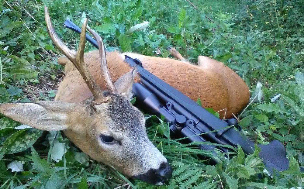 Fox bullets roe deer buck