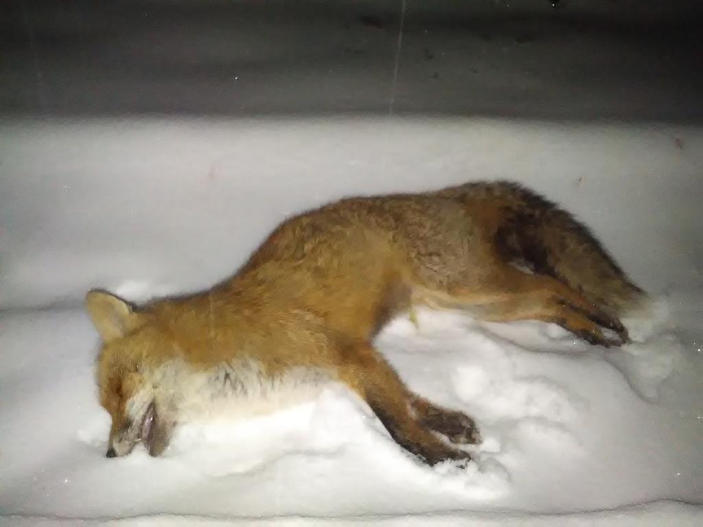 Fox Bullets - Fox